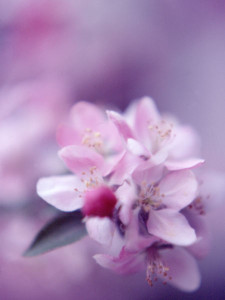 photo-natural-flora-blossom01