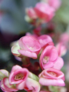 photo-natural-flora-blossom03