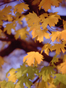photo-natural-trees-autumnleaves01