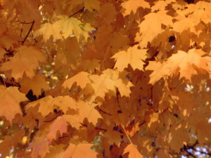 photo-natural-trees-autumnleaves02