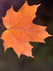 photo-natural-trees-autumnleaves03